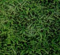 70x140cm Restje tafelzeil gras