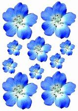 Fietsstickers bloemen blauw/paars