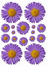Fietsstickers bloemen paars