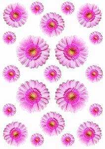 Autostickers gerbera roze